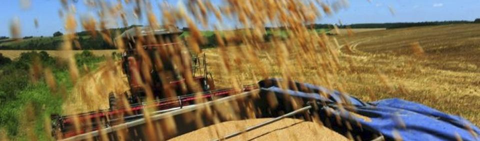Custo médio de produção de arroz no RS sobe 17,4%