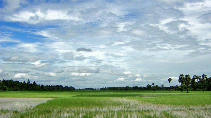 Irga divulga novo prognóstico climático para o arroz