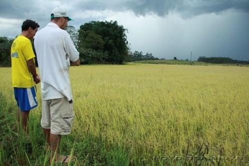 Custos de produção em alta preocupam arrozeiros para próxima safra